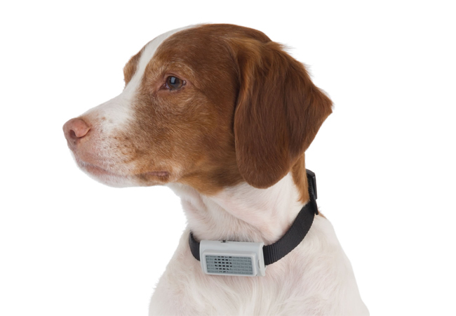 Stop Dog Barking Collar Uk