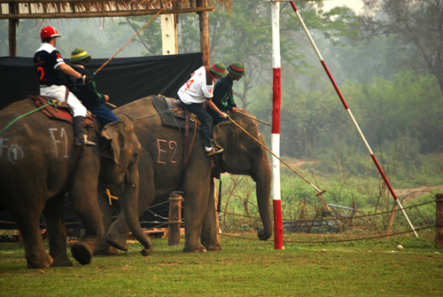 Goodacre_Playing_Elephant_Polo